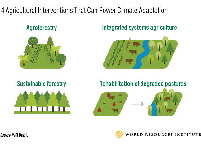 4 Ways Farmers Can Adapt to Climate Change and Generate Income