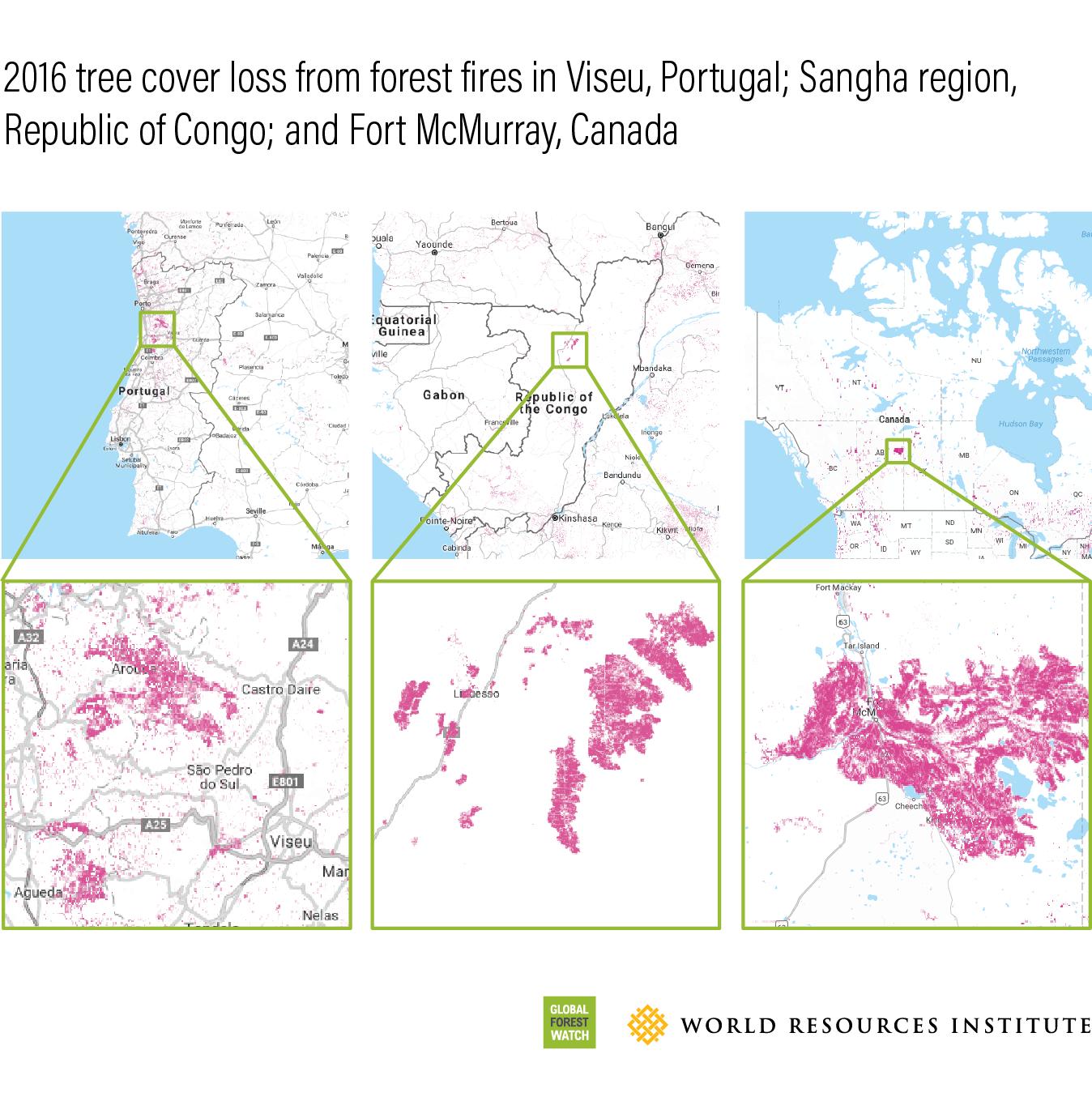 <p>La pérdida de cobertura arbórea en 2016 debida a los incendios forestales en Viceu, Portugal; la región de Sangha en la República del Congo y Fort McMurray, Canadá.</p>