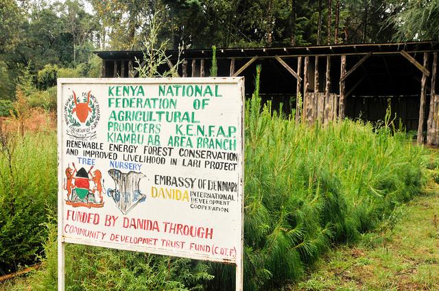 <p>Tree nursery in Kenya. Photo by Aaron Minnick/WRI</p>