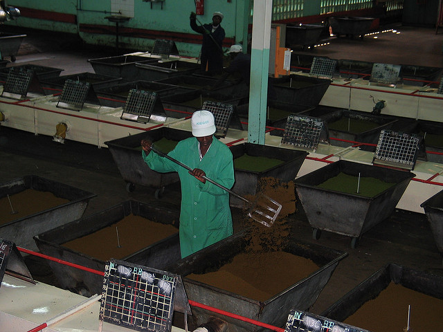 <p>Kenyan tea factories are some of the country's biggest users of firewood. Photo by Shared Interest/Flickr</p>