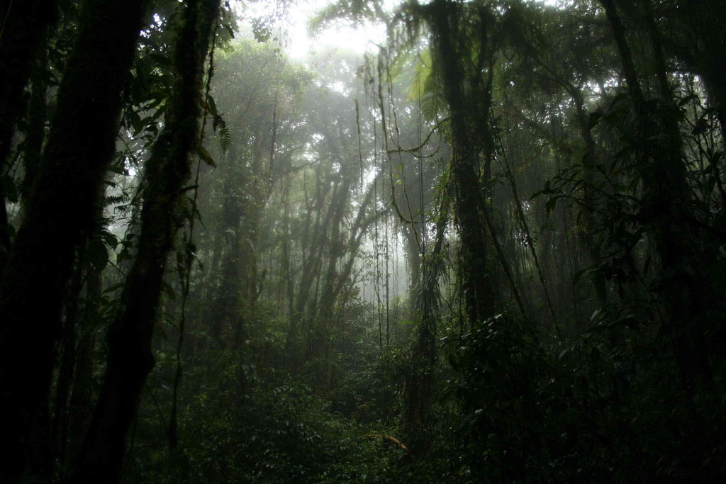 <p>A Costa Rican jungle. Flickr/seliaymiwell</p>