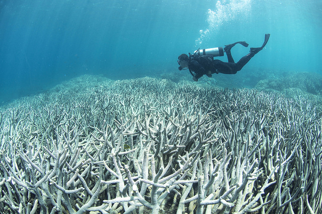 <p>Ocean acidification causes coral bleaching. Photo by Richard Vevers/The Ocean Agency/XL Catlin Seaview Survey</p>
