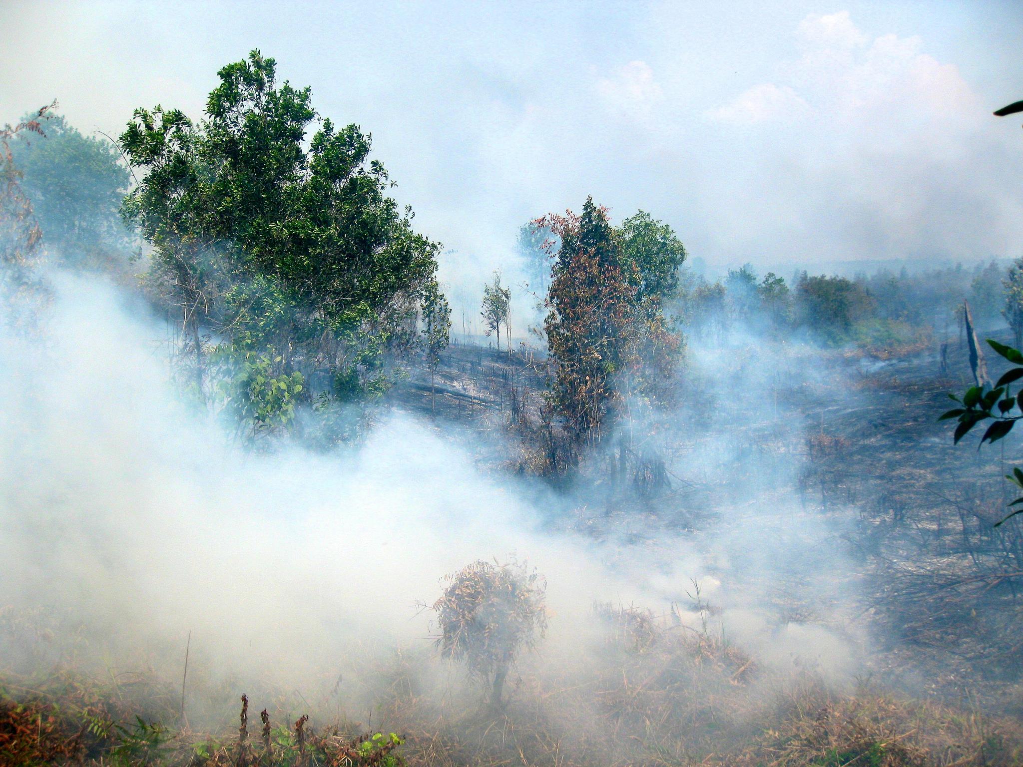 <p>Peatlands burning in Kalimantan. Flickr/CIFOR</p>