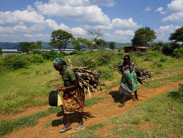 <p>Kenyan women harvest firewood. Photo by The Advocacy Project/Kenya</p>