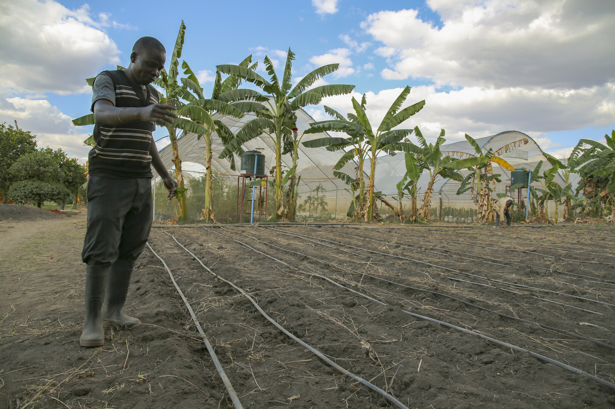<p>Drip irrigation project in Malawi. Flickr/IFPRI</p>