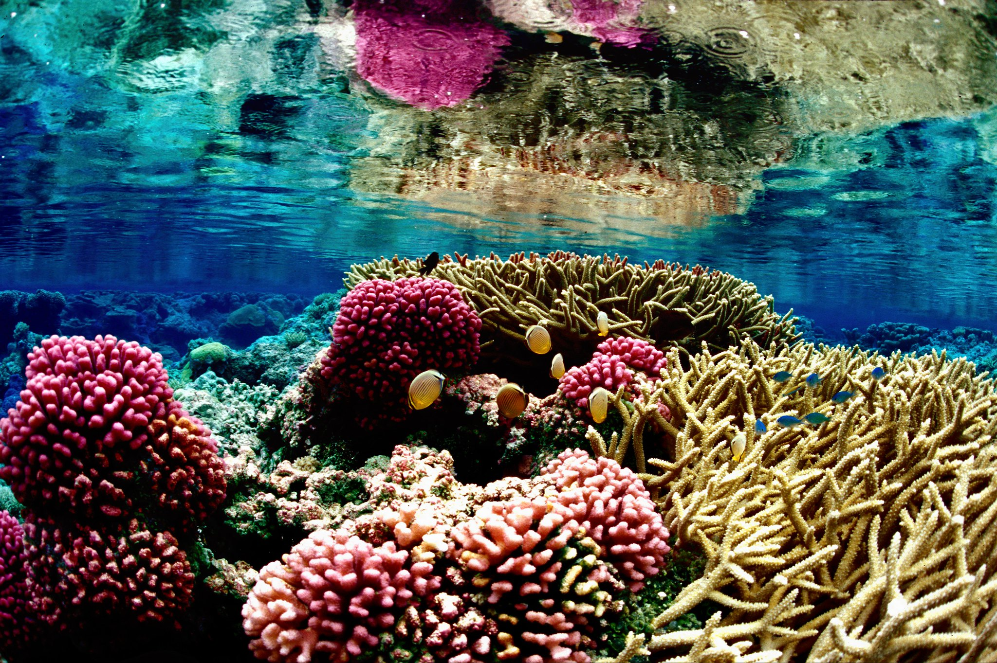 <p>Coral reef at Palmyra Atoll National Wildlife Refuge. Flickr/USFWS - Pacific Region</p>