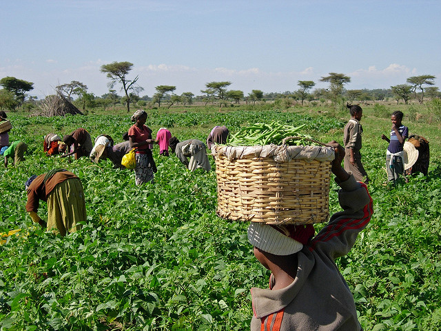 <p>Food losses near the farm are a significant concern in many developing countries, in part due to lack of adequate storage. Photo by K. Stefanova/USAID</p>