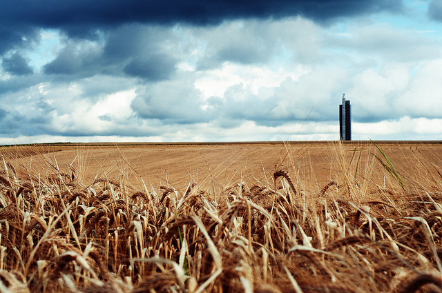 <p>Wheat companies have pooled resources to introduce climate resilience measures. Photo by Marcus/Flickr</p>