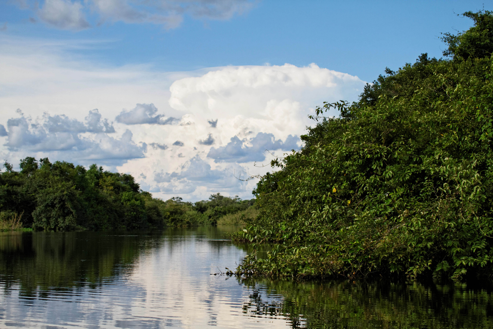<p>Pantanal wetlands in Mato Grosso. Flickr/Ronald Woan</p>