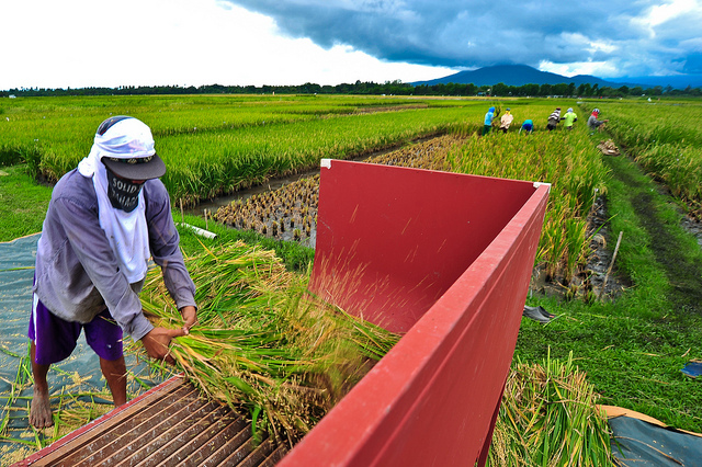<p>Caption: Rice farmers in the Philippines. Photo by IRRI/Flickr</p>