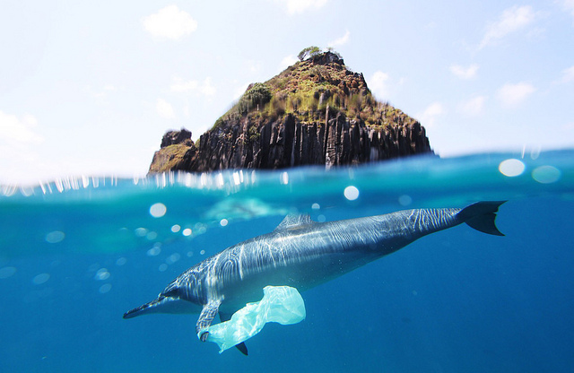 <p>A dolphin swims through plastic bag pollution. Photo by Jedimentat44/Flickr</p>