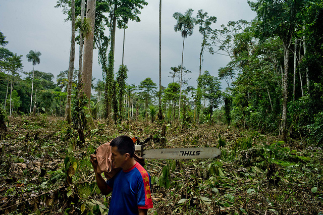 <p>Cleared forest in Orellana, Ecuador. Photo by Tomas Munita/CIFOR</p>