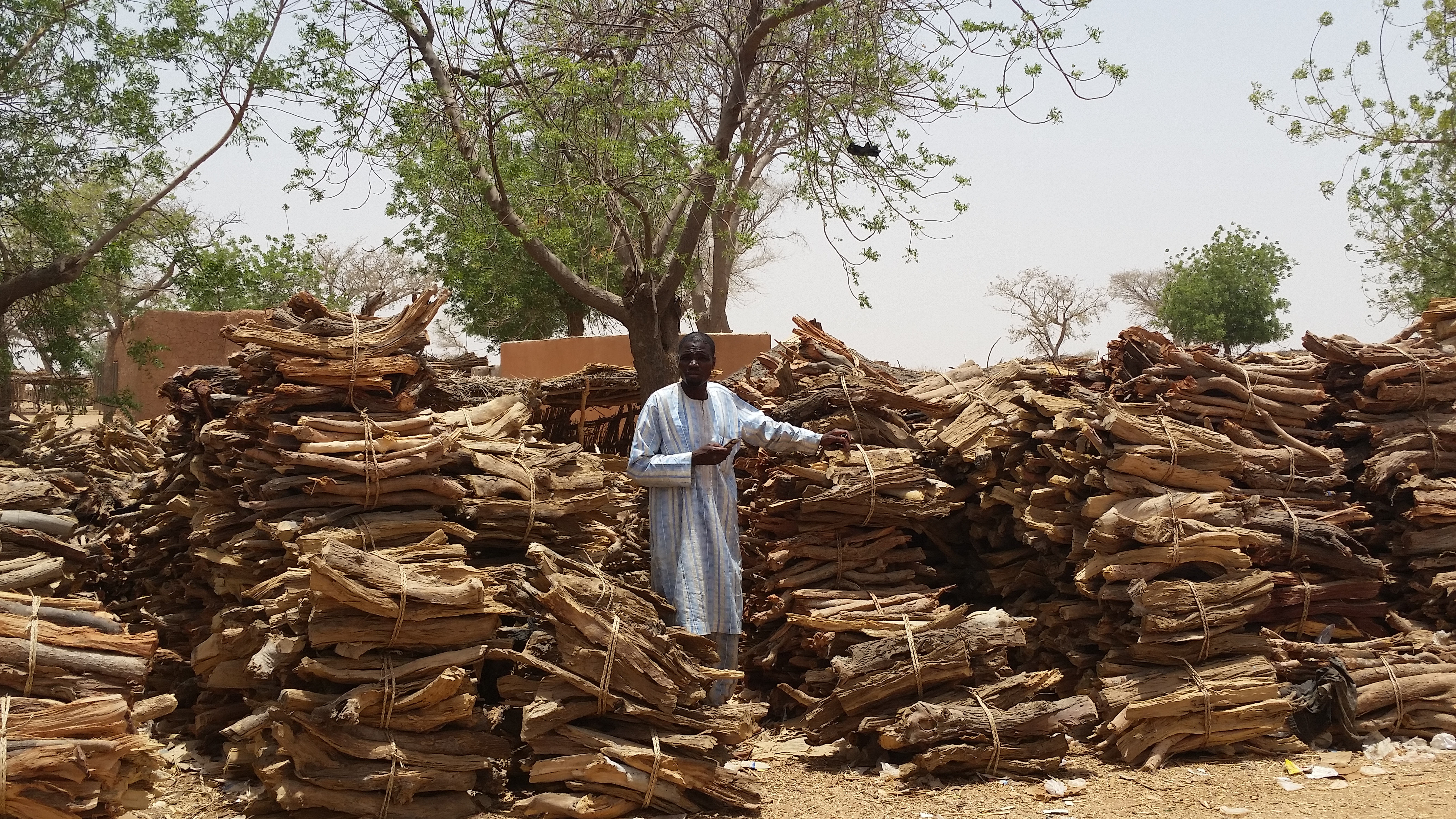 <p>Malam's tree management has been so successful that he now sells trimmings to other villagers. Photo: Salima Mahamoudou</p>