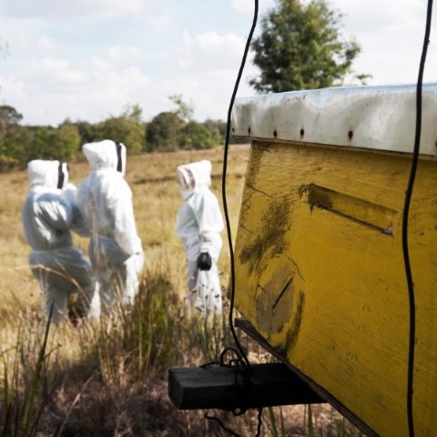 <p>Workers at one of HoneyCare Africa's beehives. Photo by HoneyCare Africa</p>