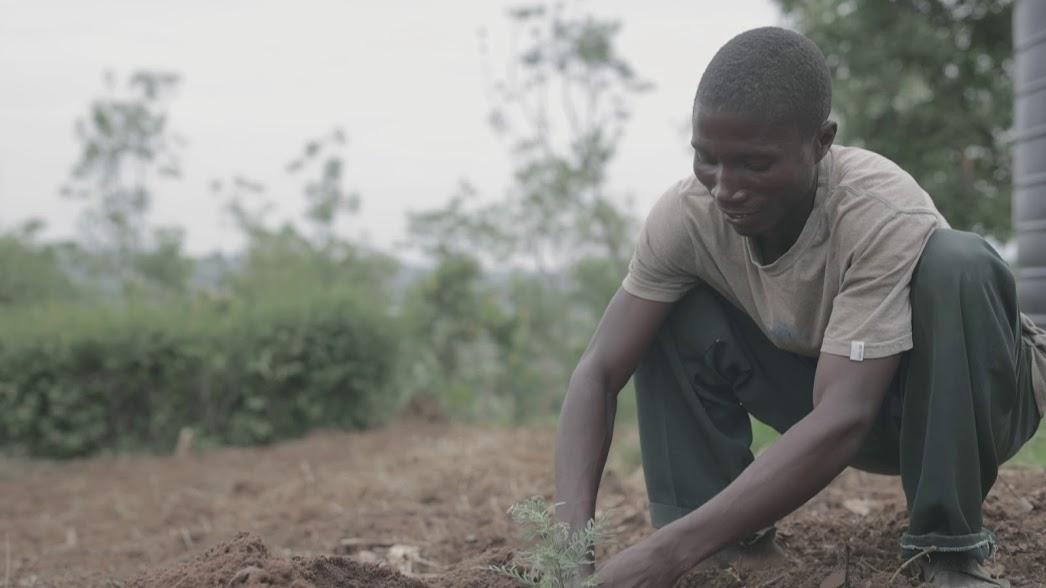 <p>Planting a Grevillea tree.</p>