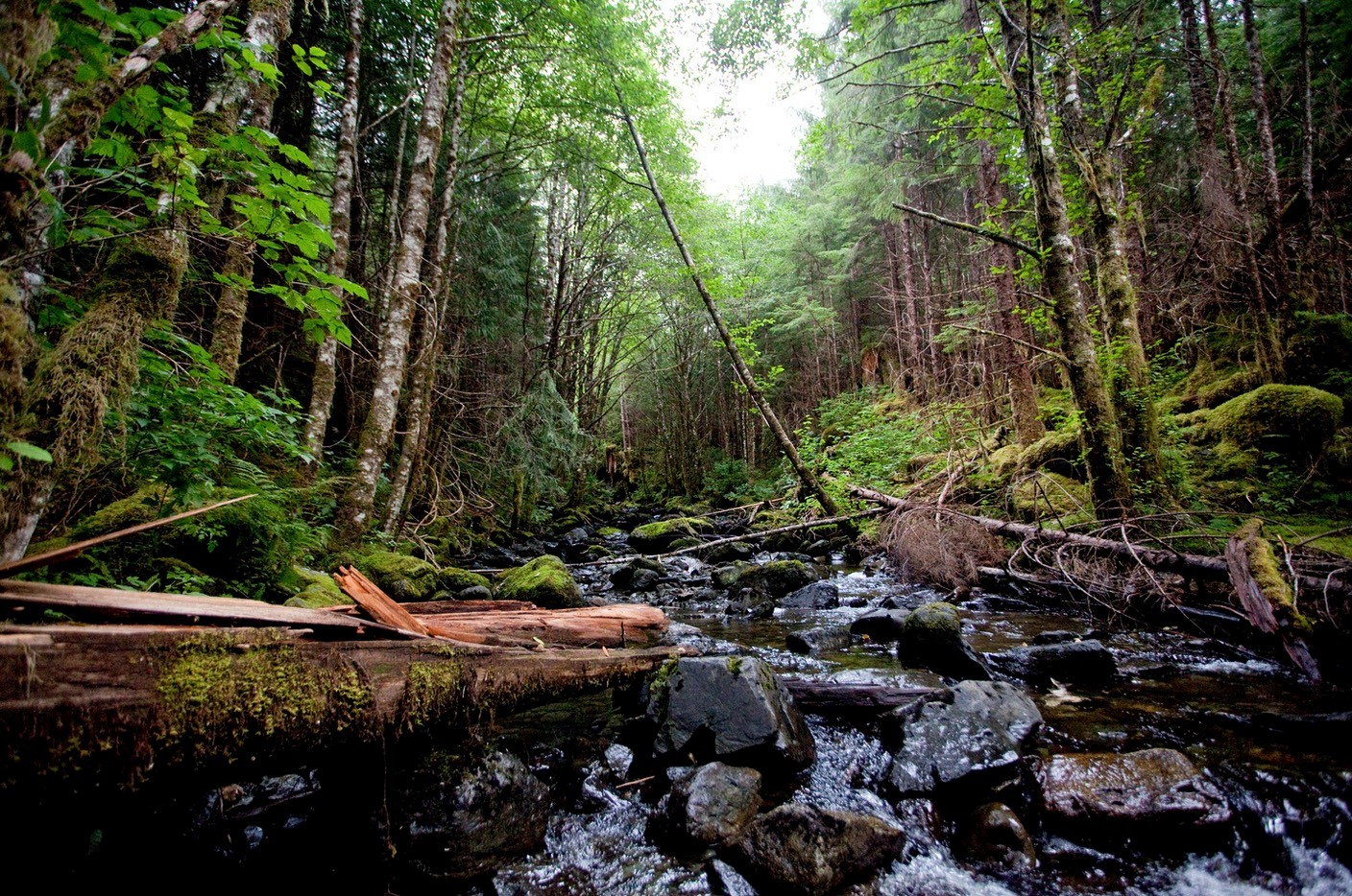 <p>Tongass National Forest, home to Sitka spruce. Photo credit: RA Beattie/Musicians for Forests</p>