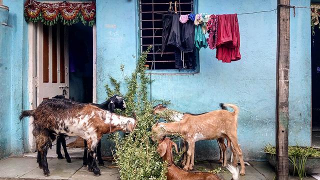 <p>Photo Credit: Lubaina Rangwala/WRI India</p>
