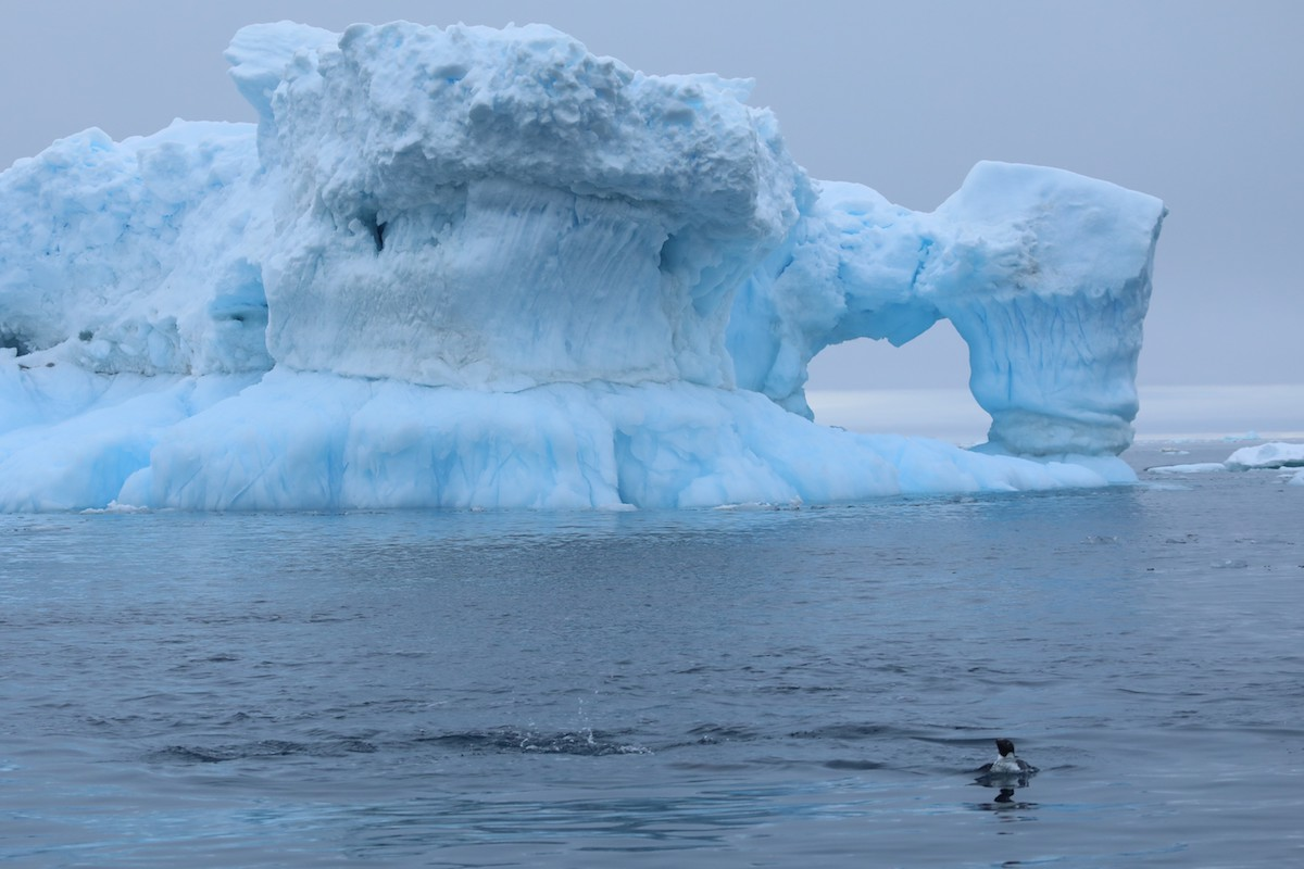 <p>Ice loss from the Antarctic Ice Sheet has rapidly accelerated over the last four decades. Photo by Kelly Levin/WRI</p>