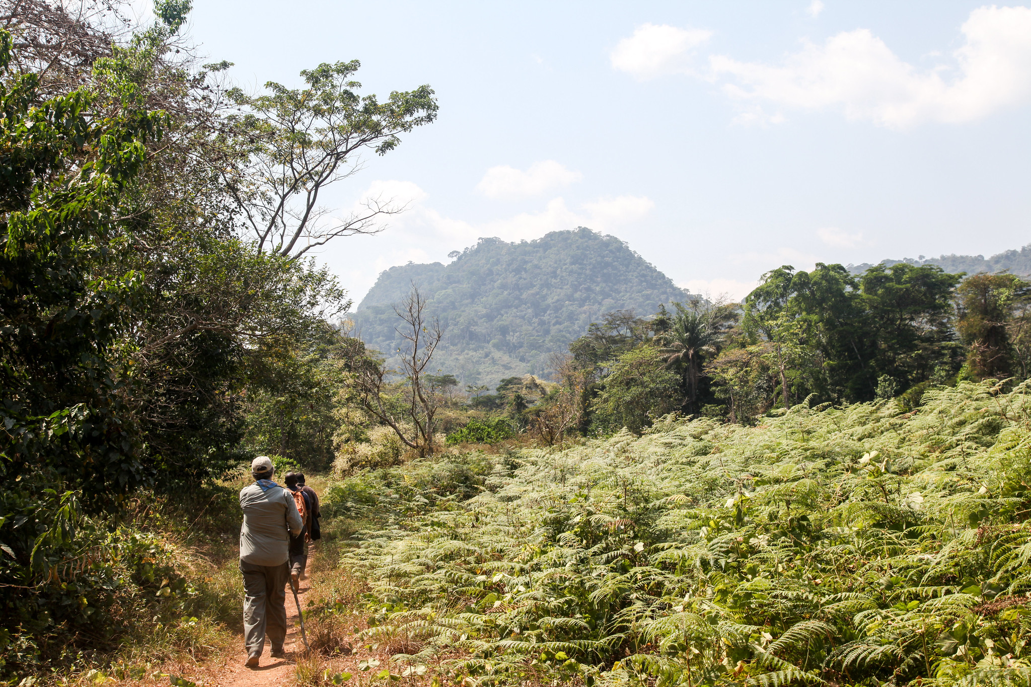 <p>Locals walking along a path in Liberia\'s Upper Guinea Forest. Photo by Terry Sunderland/CIFOR</p>
