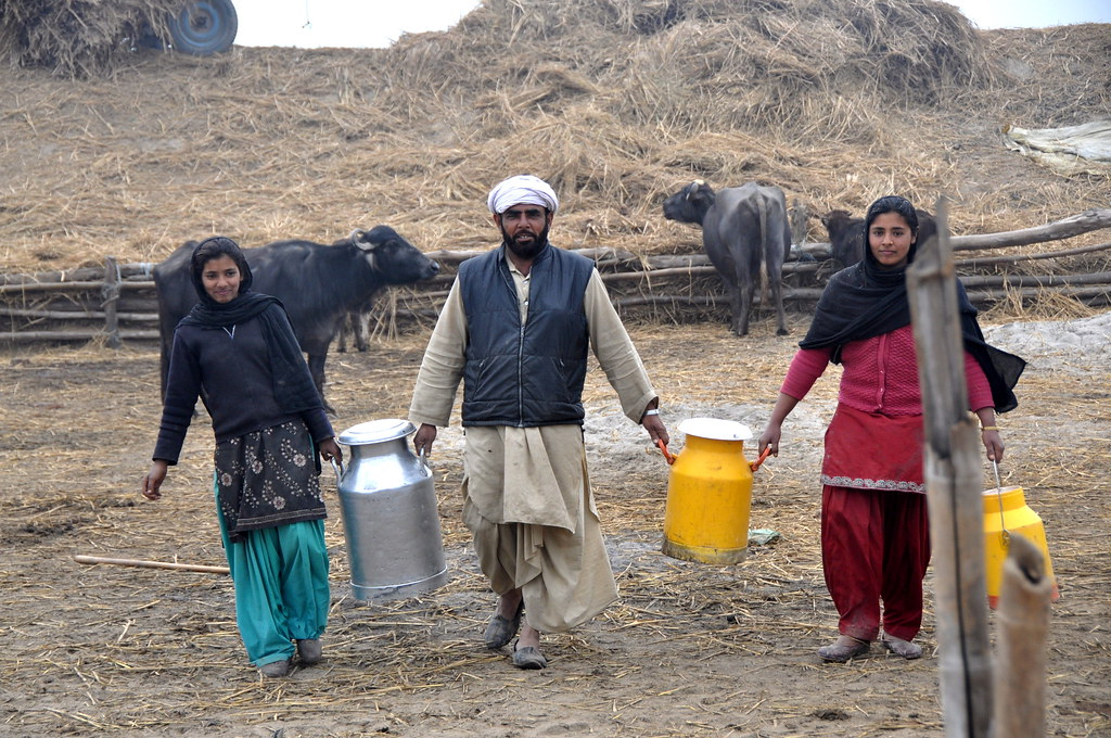 <p>A dairy farming family carrying their cows\' milk in Punjab, India. Photo by P. Casier/CGIAR.</p>