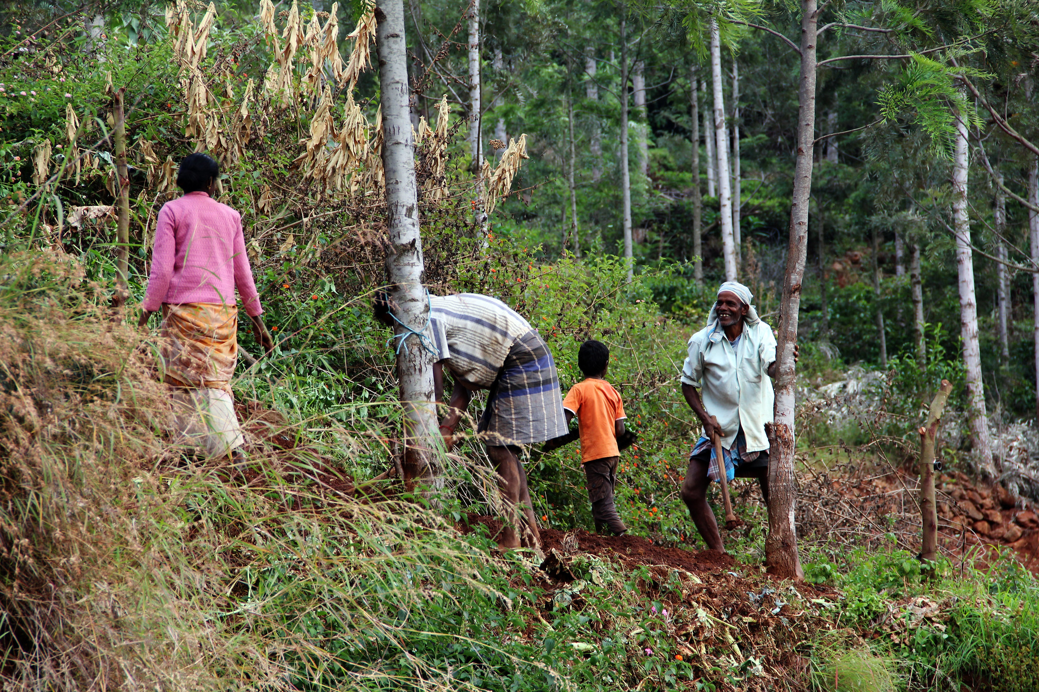 <p>Many rural communities in India practice agroforestry. Photo by James Anderson/WRI</p>