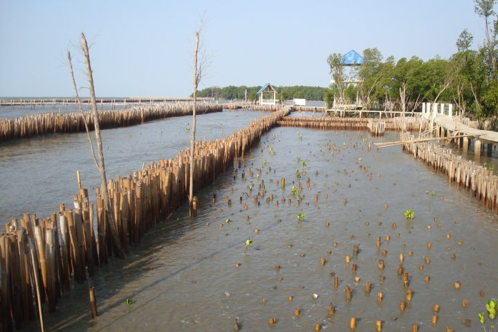 <p>A mangrove restoration project in Mahachai, Thailand. Photo by Dow Maneerattana/WRI.</p>