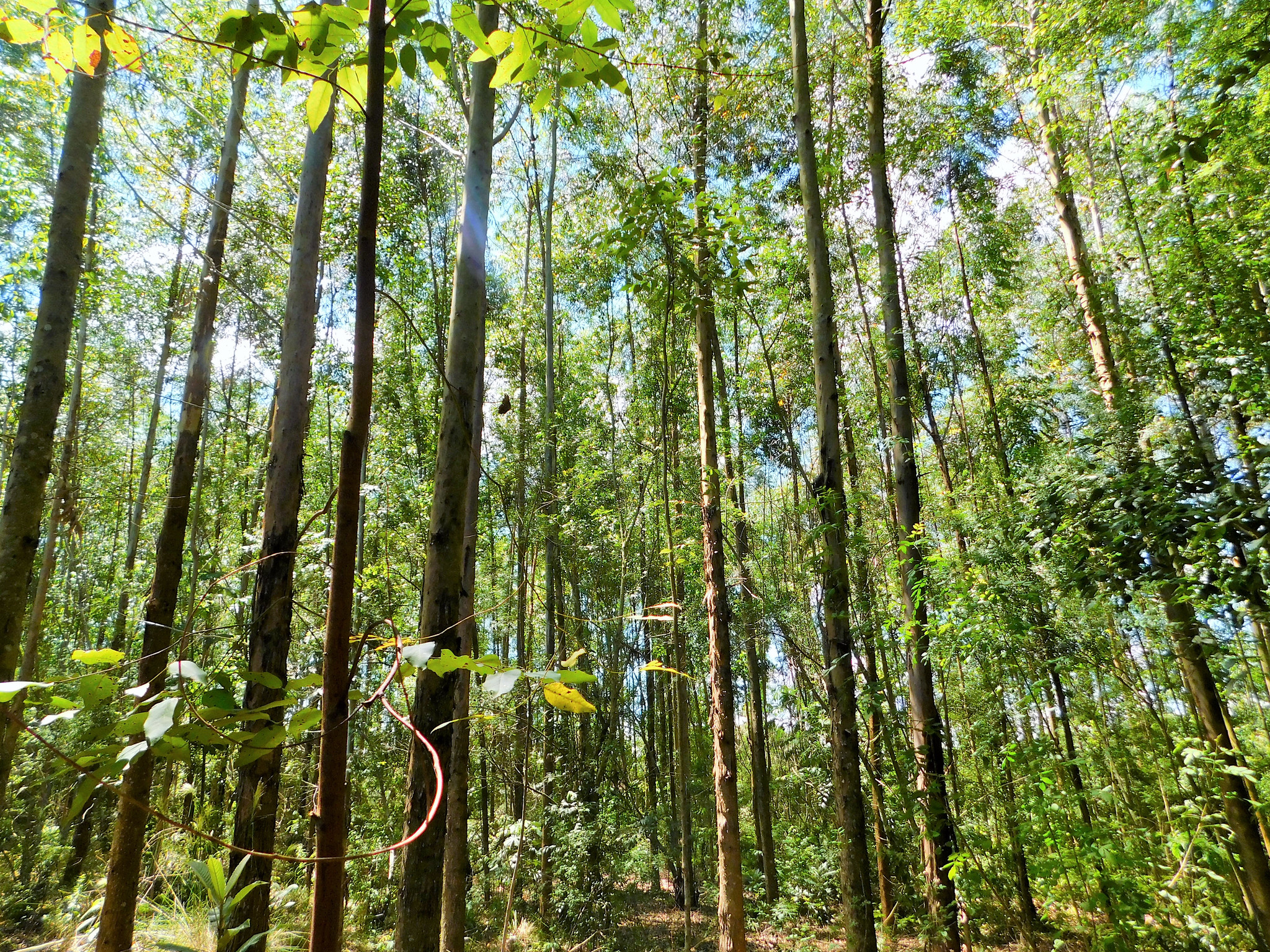 <p>CO2-EOR with direct air capture is just one tool. Other methods of capturing carbon, like planting trees, also need investment. Photo by Yoly Guterrez/CIFOR.</p>