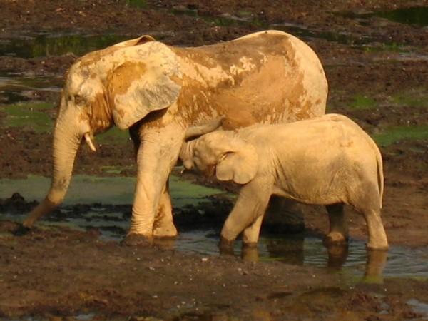 <p>The Dzanga-Ndoki National Park is adjacent to the CAR\'s logging areas.</p>