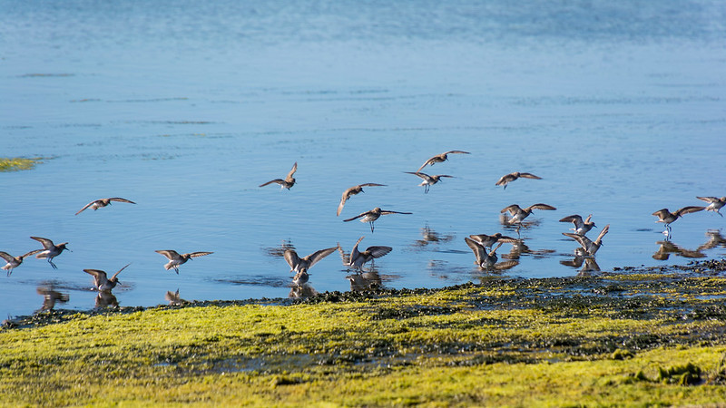 <p>Flock of birds at Elkhorn Slough, California. Photo by Don DeBold/Flickr</p>