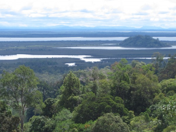 <p>Current expansion plans include the conversion of forest and peat land. (Photo: WRI)</p>