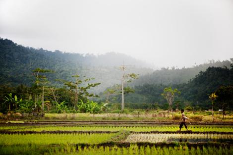 Farmer walking in field in Sumatra