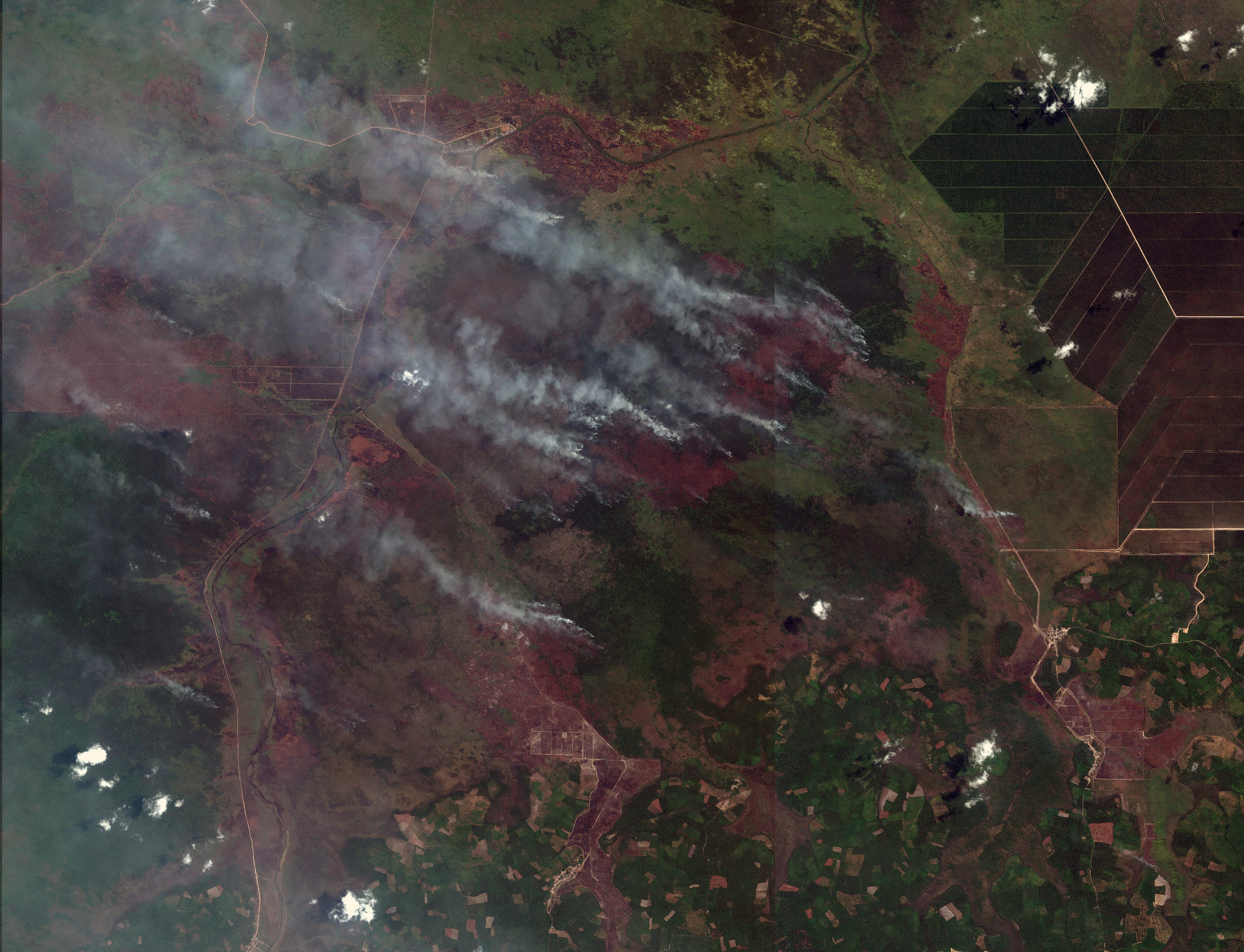 <p>Large active fires on cleared or severely degraded, previously forest land in South Sumatra on September 10th were captured in this image by Digital Globe's WorldView-2 satellite. (Lat -3.39, Lon 105.50; view active fires in this location on GFW Fires)</p>