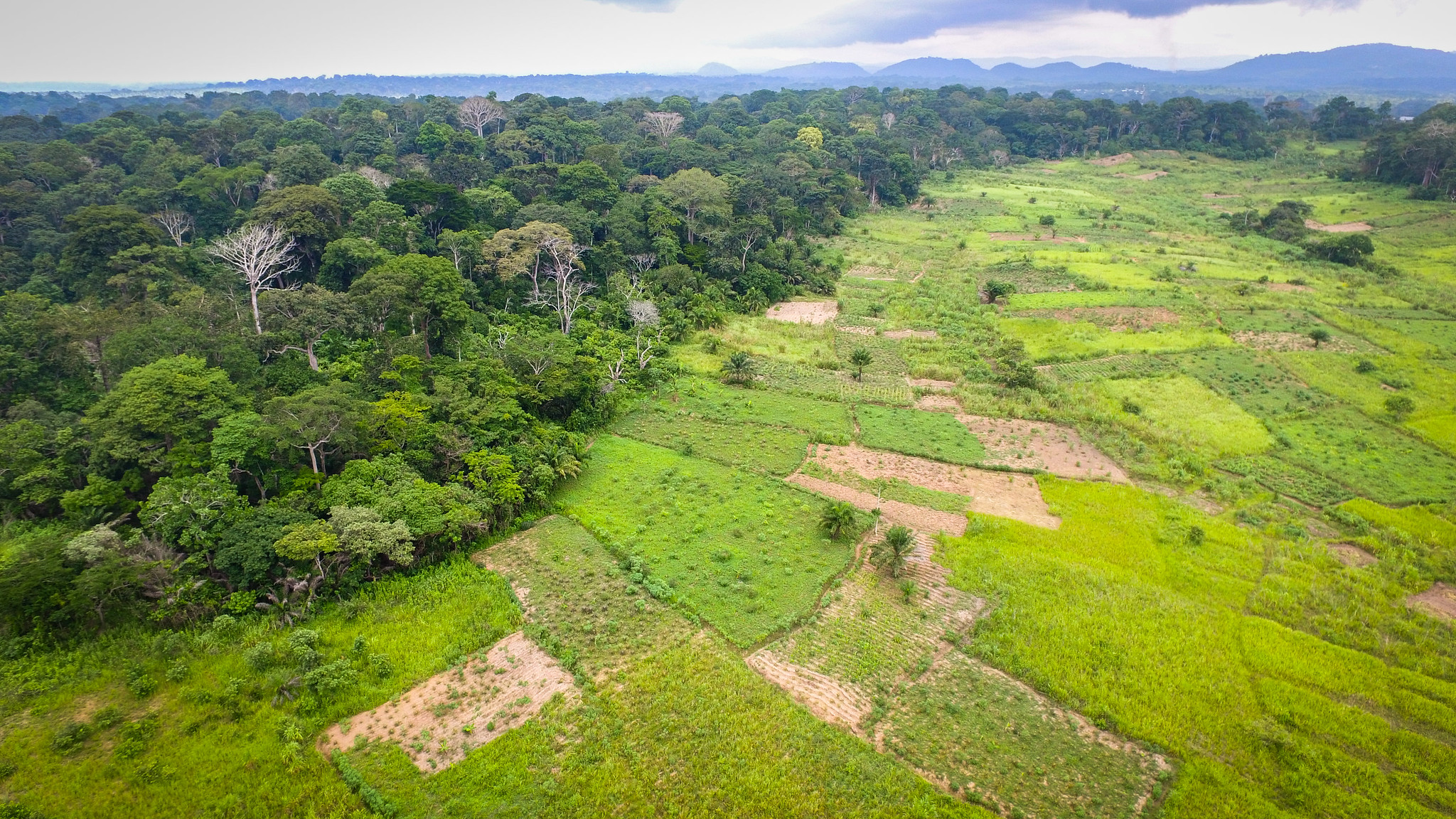 <p>The boundaries between forests and human development are becoming more and more muddled. Photo by Mokhamad Edliadi/CIFOR.</p>
