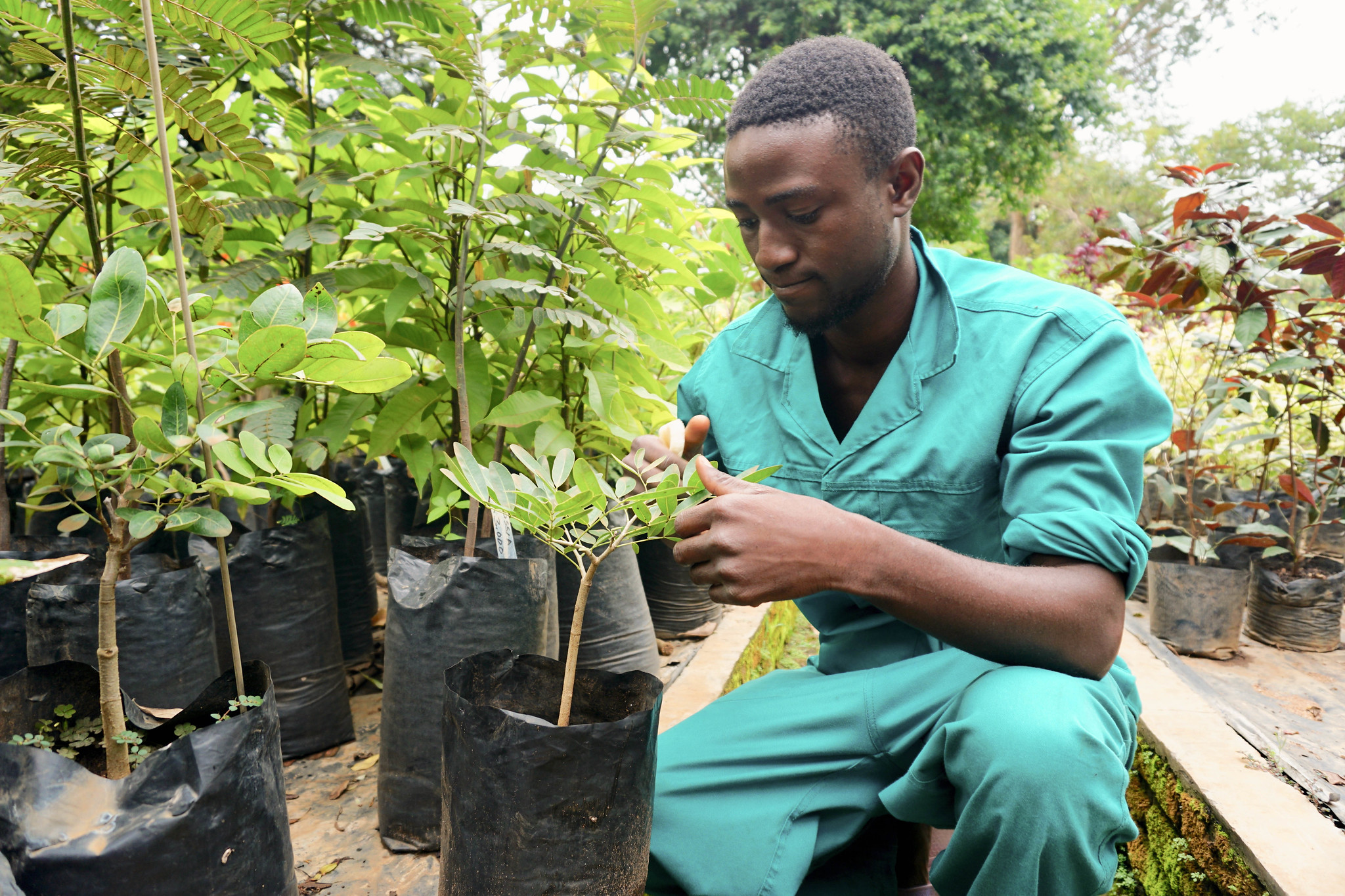 <p>To restore more degraded landscapes, governments and investors need to support small businesses like this plant nursery in Malawi. Photo by Sabin Ray/WRI.</p>