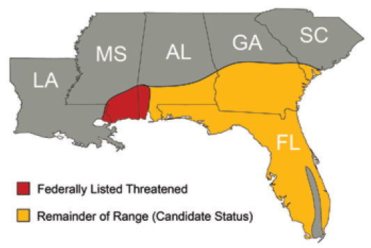 <p>Approximate range and status of the gopher tortoise. Source: Gopher Tortoise Council</p>
