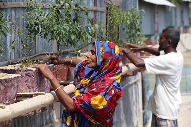 <p>A couple in Bangladesh plants chilies outside their climate-smart home. Photo by WorldFish/Flickr</p>