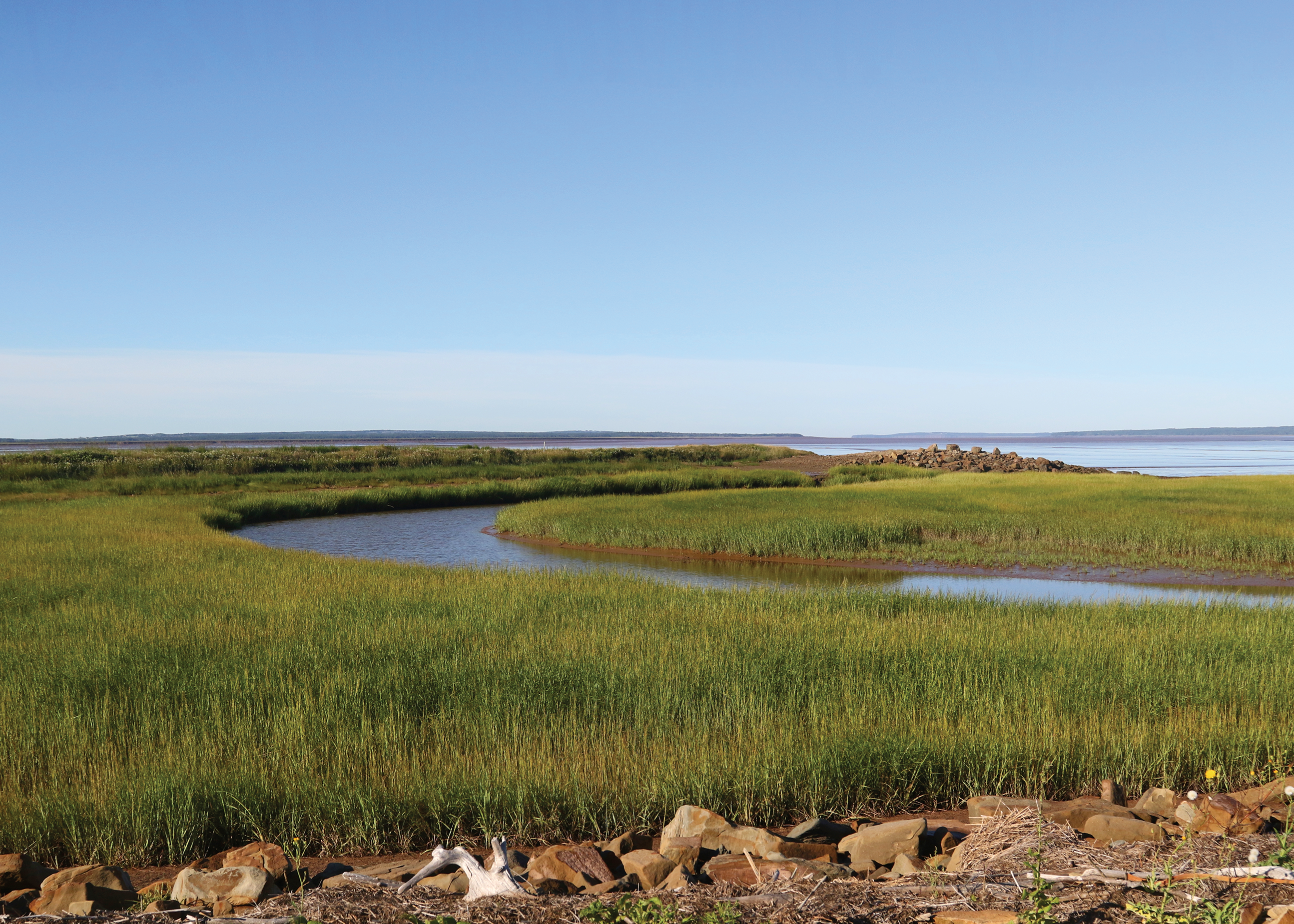 <p>Salt marshes, like this one in Nova Scotia, are a nature-based solution that can reduce coastal flooding and protect communities. Photo credit to Trish Hartmann/Flickr</p>