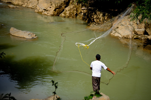 <p>A fisherman casts his net in Yogyakarta. Fisheries conservation is an important part of Indonesia's vision for low carbon development. Photo by the International Rice Research Institute.</p>
