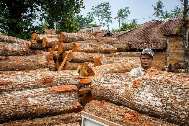 <p>Indonesian teak wood. Photo by Deanna Ramsay/CIFOR</p>