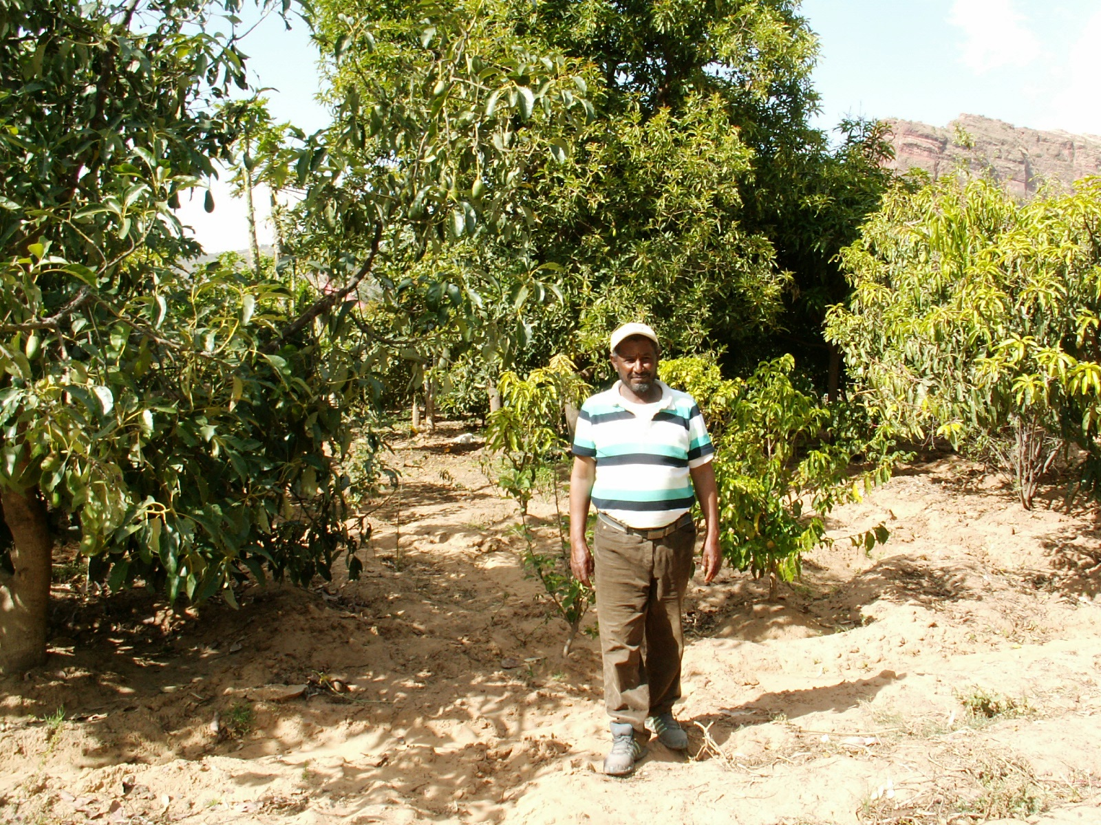 <p>Village leader Aba Hawi in his irrigated orchard in Tigray. Photo by Chris Reij/WRI</p>