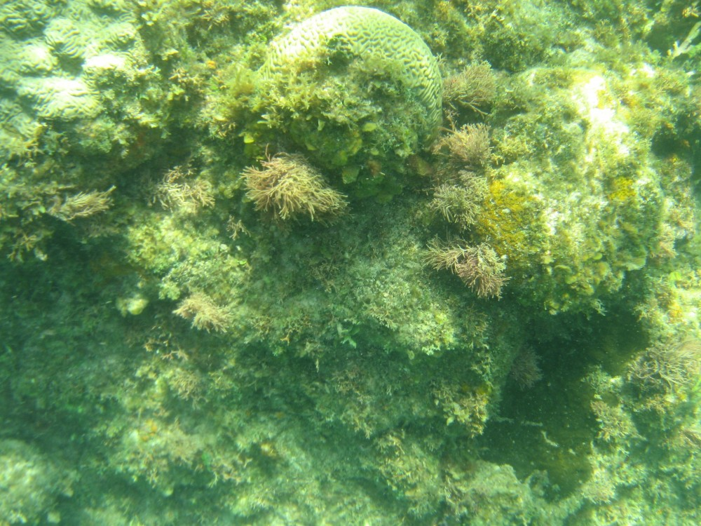<p>A glimpse of Jamaica\'s degraded reefs. Photo credit: WRI</p>