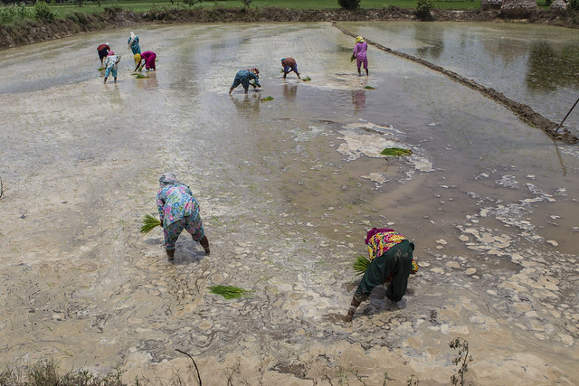 <p>Women in India engage in climate-smart agriculture. Photo by Prashanth Vishwanathan/Climate Change, Agriculture and Food Security</p>