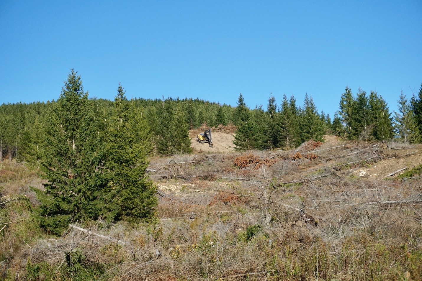 <p>Mechanical removal of non-native Norway spruce is followed by deep ripping to de-compact soils, prior to the planting of red spruce seedling on the Mower Tract. Photo: Sabin Ray, WRI</p>