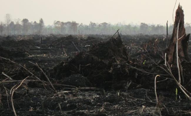 <p>Api telah membakar ratusan hektar lahan yang dikelola oleh PT. Surya Dumai Agrindo, pemasok untuk First Resources (anggota RSPO). Dekat Desa Dompas, Provinsi Riau. Foto oleh: Julius Lawalata, Maret 2014.</p>
