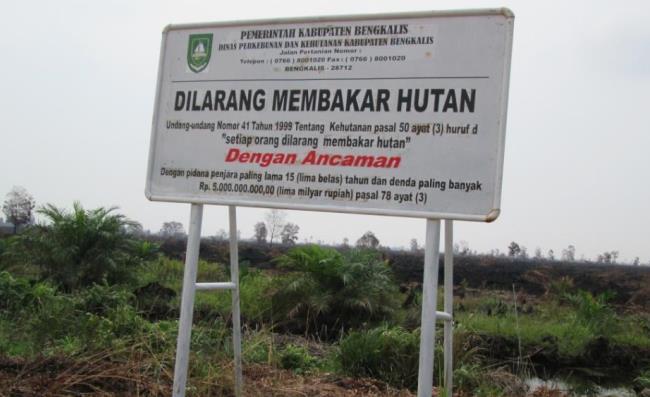 """<p>Papan peringatan yang bertuliskan """"Dilarang Membakar Hutan"""" berdiri di depan ratusan lahan yang terbakar di dekat Desa Selinsing, Provinsi Riau. Foto oleh: Julius Lawalata, Maret 2014.</p>"""