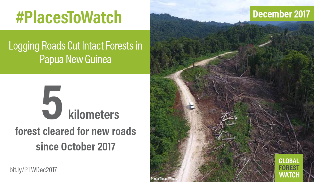 <p>New logging roads extend across East New Britain Province, Papua New Guinea. Photo by Global Witness, November 2017</p>