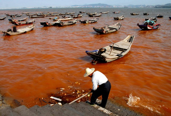 Red tide in Xiamen