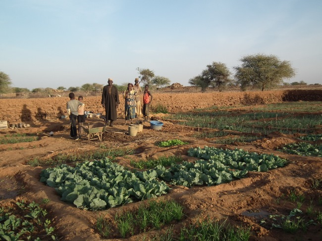<p>Higher water levels in the village of Batodi (Illéla district, Niger) allowed farm families to create vegetable gardens around some hand-dug wells. Photo Credit: Chris Reij, WRI</p>
