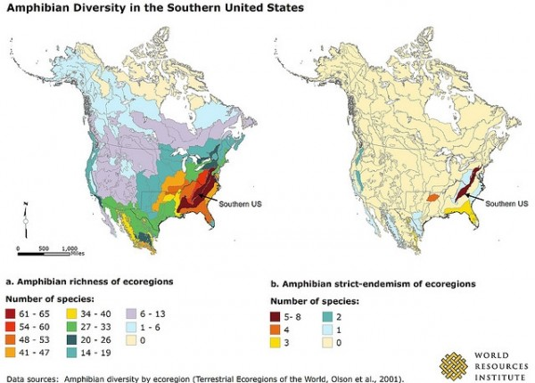 <p>Home to 170 amphibian and 197 reptile species, southern forest ecosystems are a center of amphibian and reptile diversity in North America.</p>