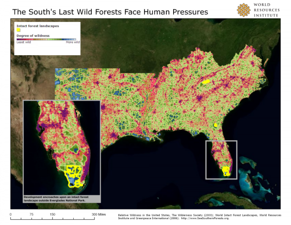 <p><strong>The South\'s Last Wild Forests Face Human Pressures</strong></p>